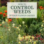 6 Tips for Controlling Weeds in Your Flower Garden