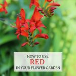 How to Use Red in Your Flower Garden