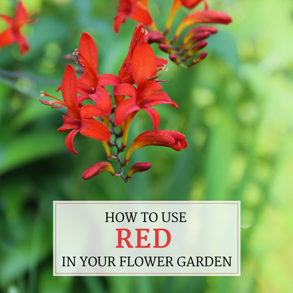 How to Use Red in Your Flower Garden - Longfield Gardens