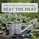 How to Help Your Flower Garden Beat the Heat