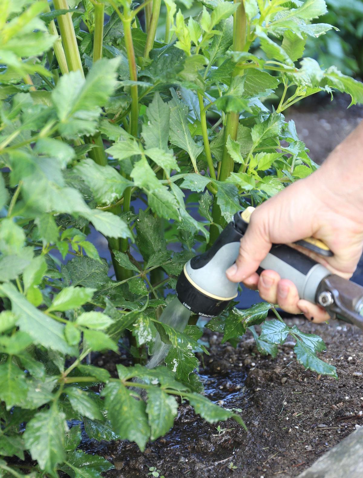 How to Help Your Flower Garden Beat the Heat - Longfield Gardens