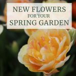 New Flowers for Your Spring Garden