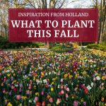What to Plant This Fall: Inspiration from Holland
