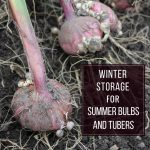 Winter Storage for Summer Bulbs and Tubers