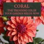 Coral Flowers: The Trending Color Your Garden Needs Now