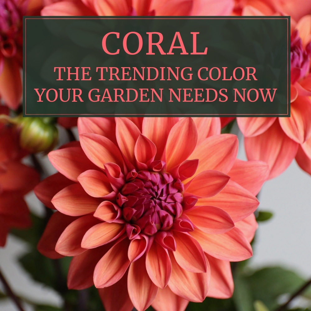 Coral Flowers The Trending Color Your Garden Needs Now