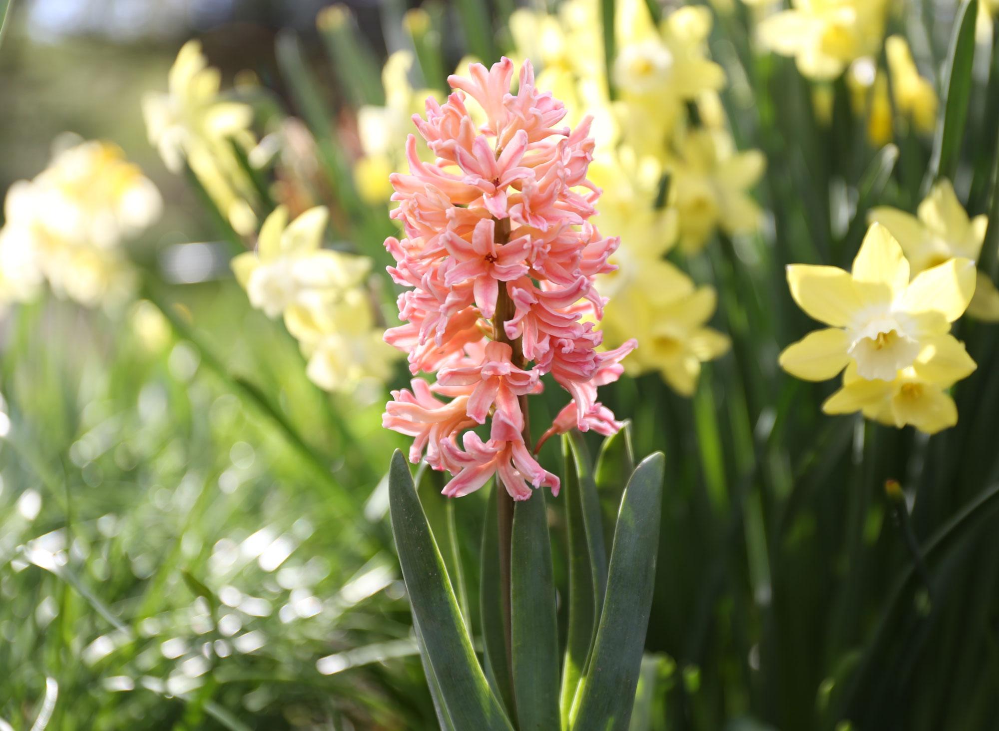 Coral Flowers Your Garden Needs Now - Longfield Gardens