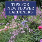 7 Tips for Beginning Flower Gardeners