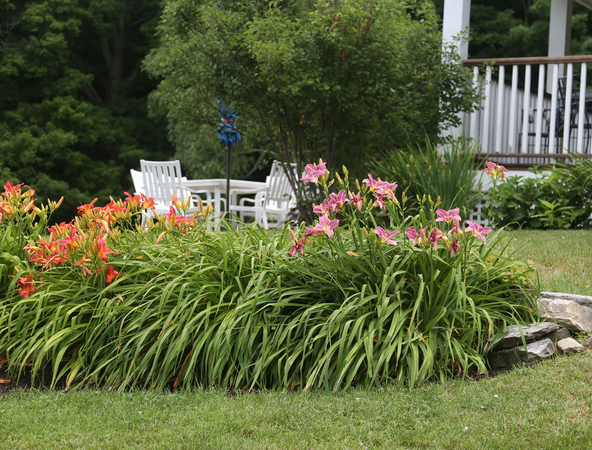 Landscaping-With-Daylilies-Longfield-Gardens