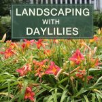 Landscaping with Daylilies