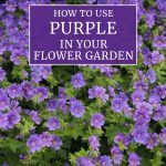 How to Use Purple in Your Flower Garden
