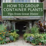 How to Group Container Plants: Tips from Great Dixter