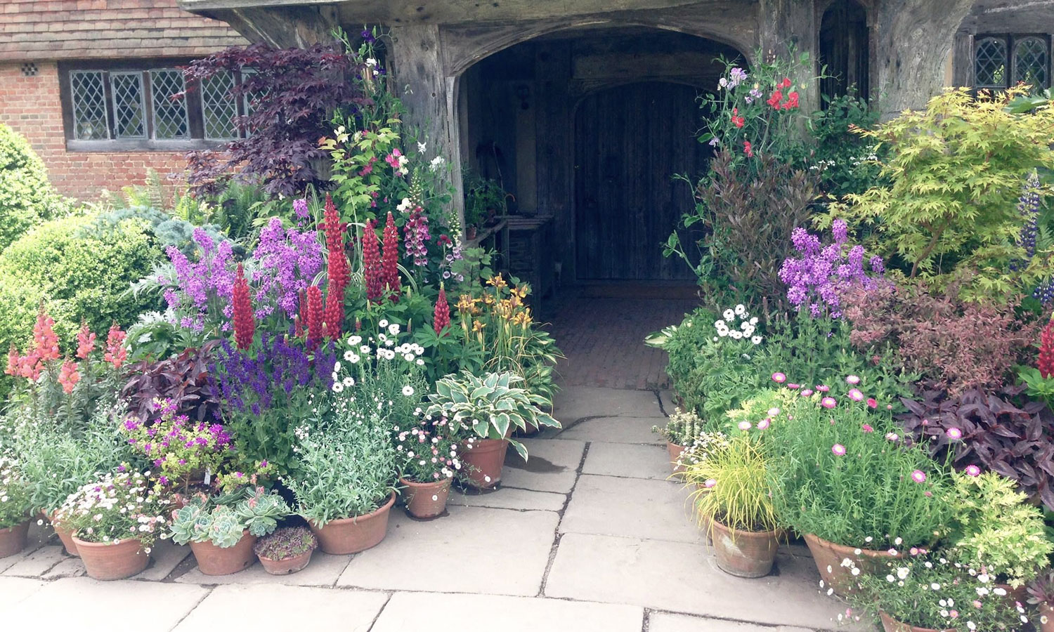 How to Group Container Plants Tips from Great Dixter - Longfield Gardens