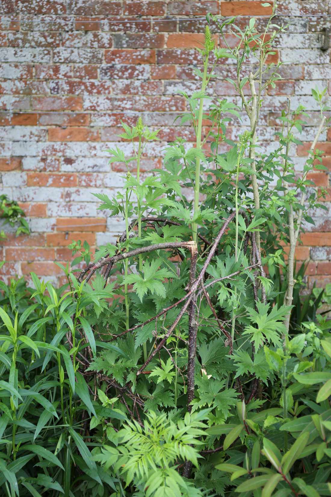 DIY Plant Supports - Longfield Gardens