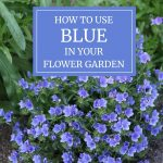 How to Use Blue in Your Flower Garden