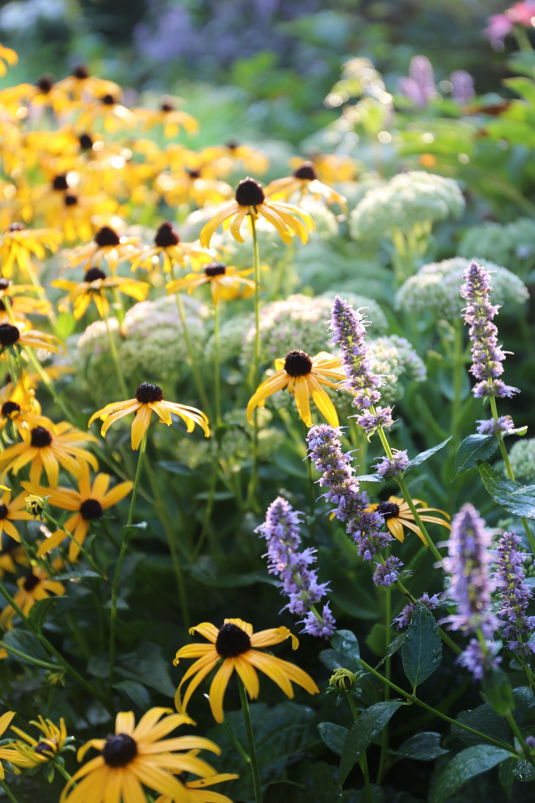 Sun or Shade: How Sunlight Affects Plants - Longfield Gardens