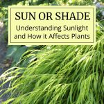 Sun or Shade: How Sunlight Affects Plants