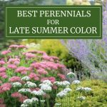 Best Perennials for Late Summer Color