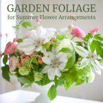 Garden Foliage for Flower Arrangements