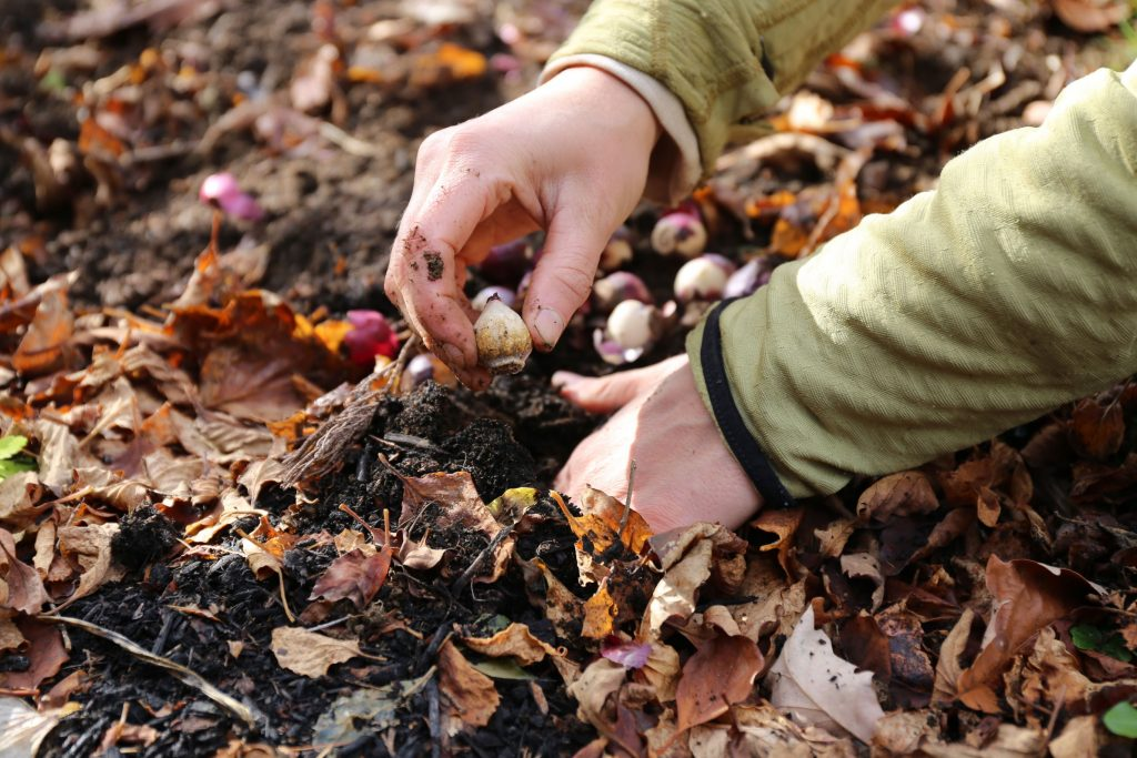 Fall-Planted Flower Bulbs Why Size and Quality Matter - Longfield Gardens