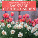 Celebrating Spring in a Backyard Cutting Garden