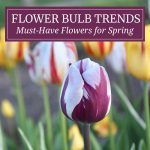 Flower Bulb Trends: What to Plant Now for Spring 2020