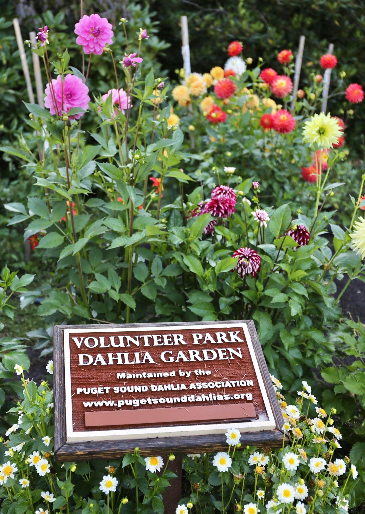 Dahlia-Display-Gardens-Longfield-Gardens