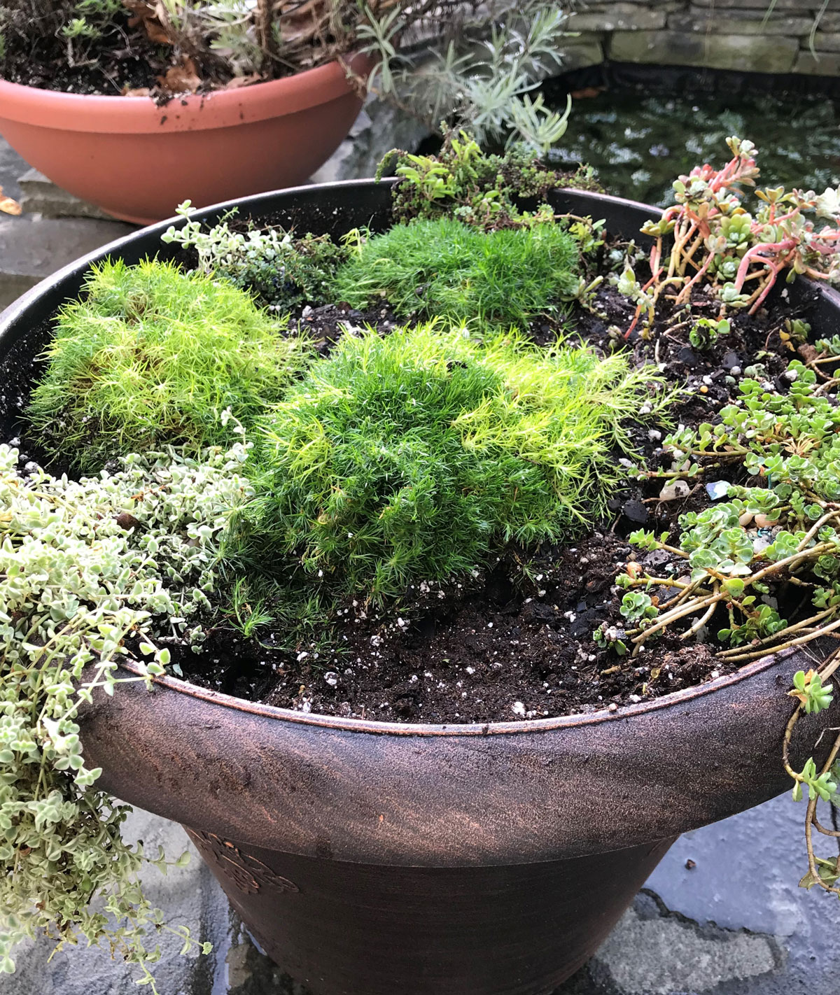 Tips for Growing Spring Bulbs in Containers - Longfield Gardens
