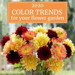 2020 Color Trends for Gardeners