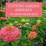 Cutting Garden Annuals to Grow from Seed