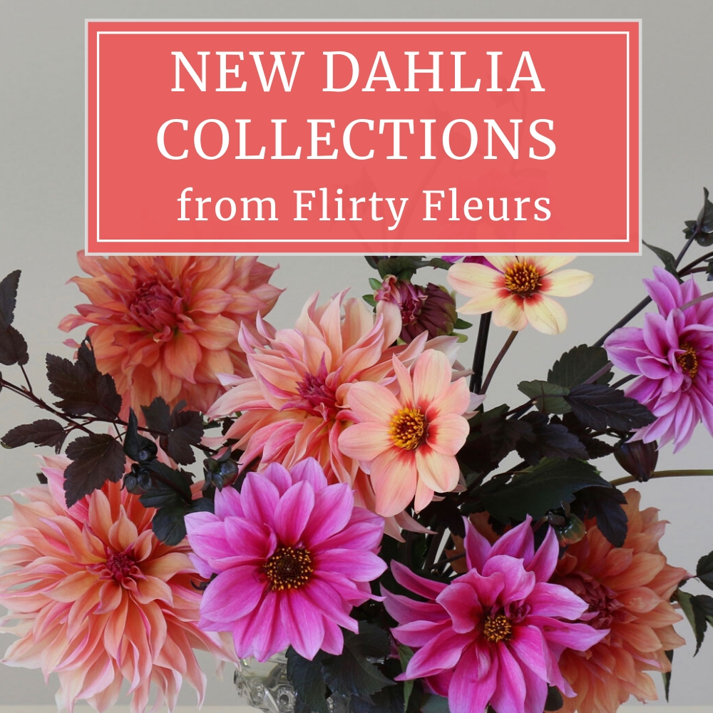 New Dahlia Collections from Flirty Fleurs copy