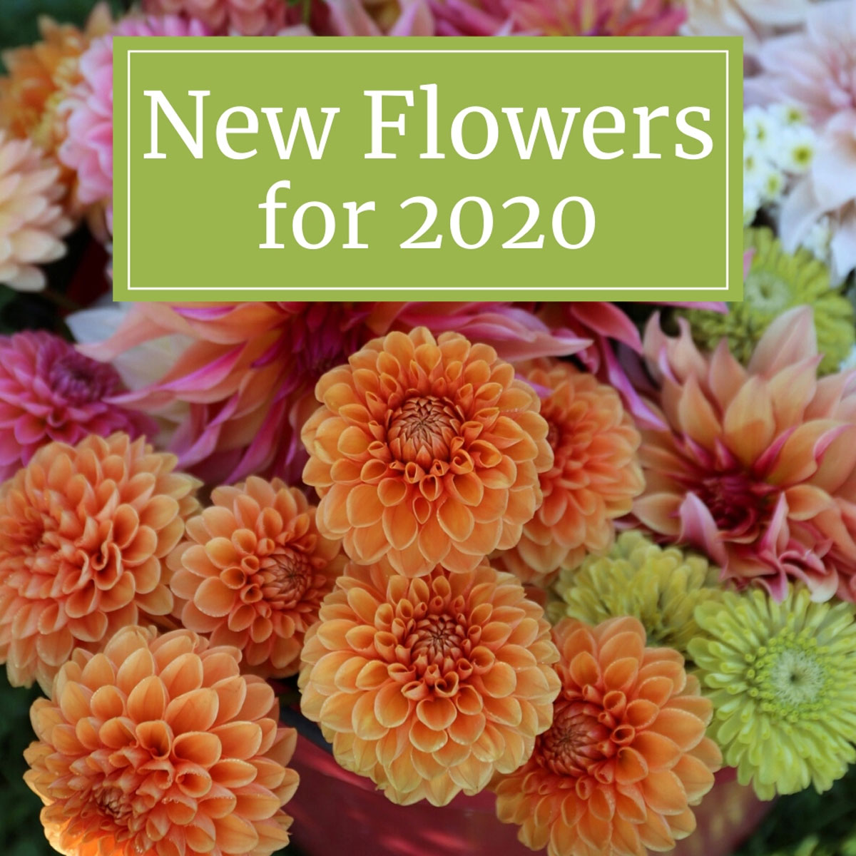 New-Flowers-for-Your 2020 Garden - Longfield Gardens
