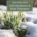 Understanding Cold Hardiness and Heat Tolerance