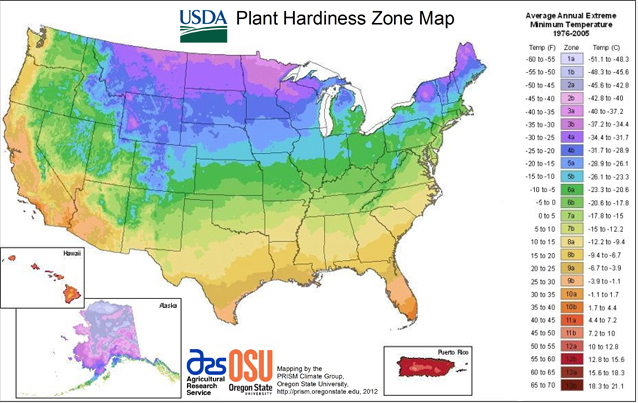 Understanding Cold Hardiness & Heat Tolerance - Longfield Gardens