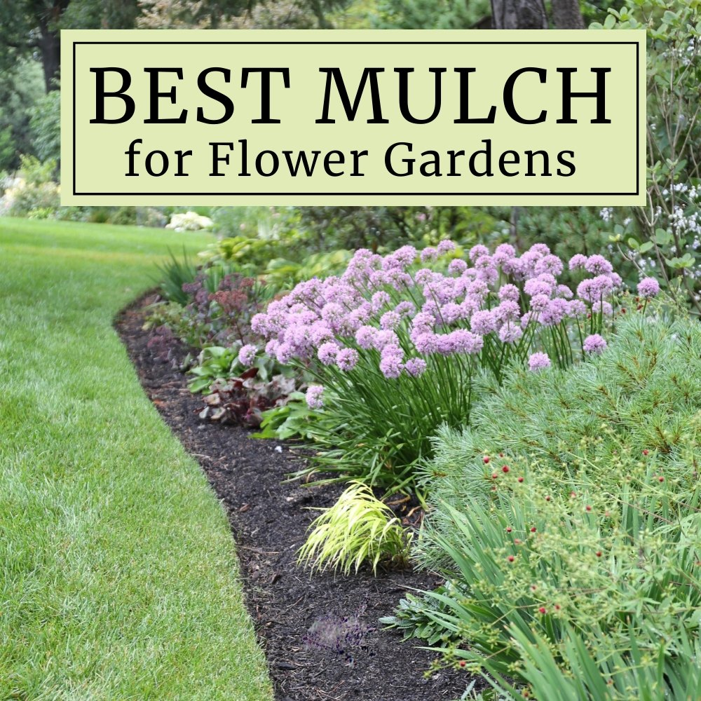 How To Choose The Best Mulch For Flower Gardens Longfield