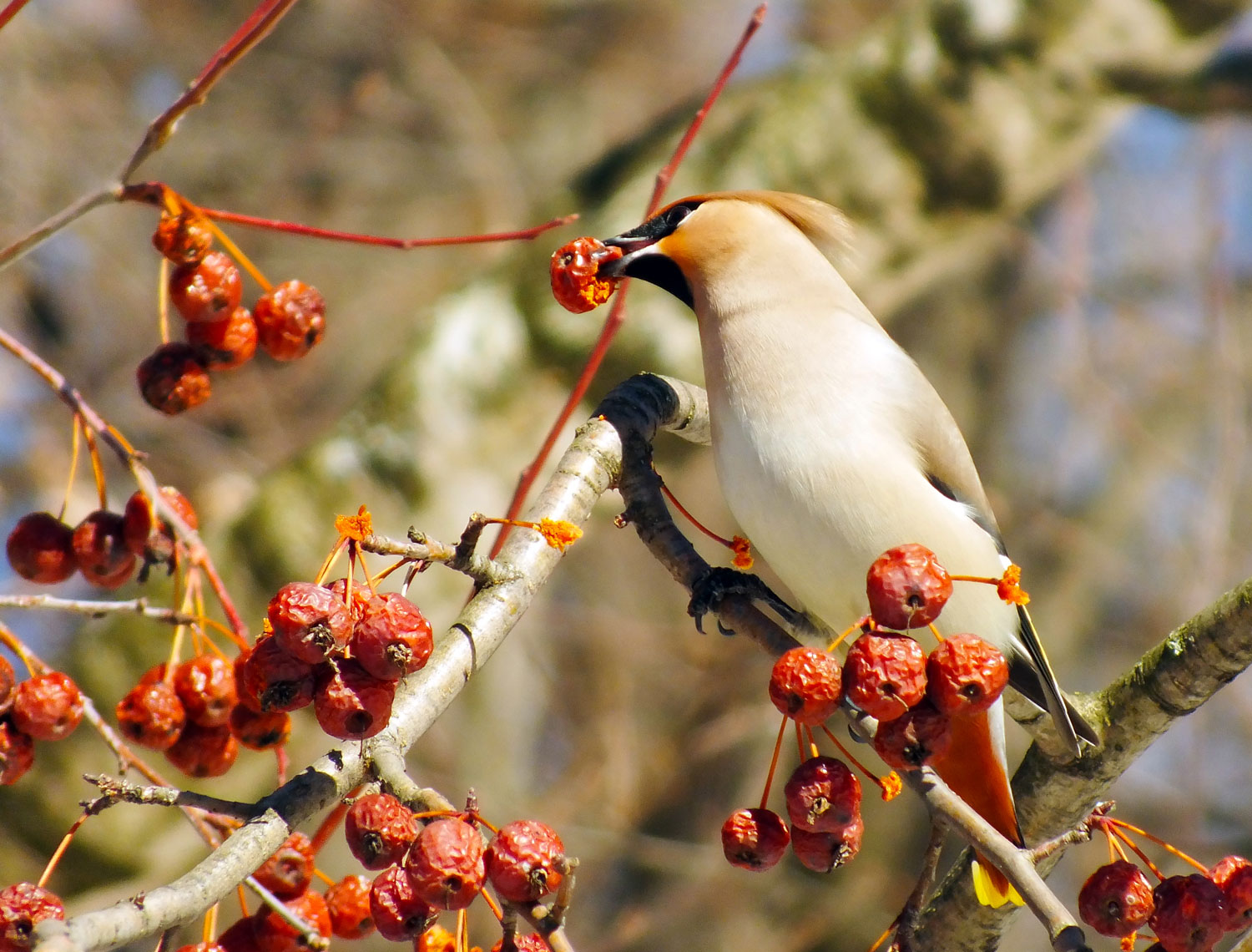 How to Attract Birds to Your Garden - Longfield Gardens