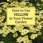 How to Use Yellow in Your Flower Garden