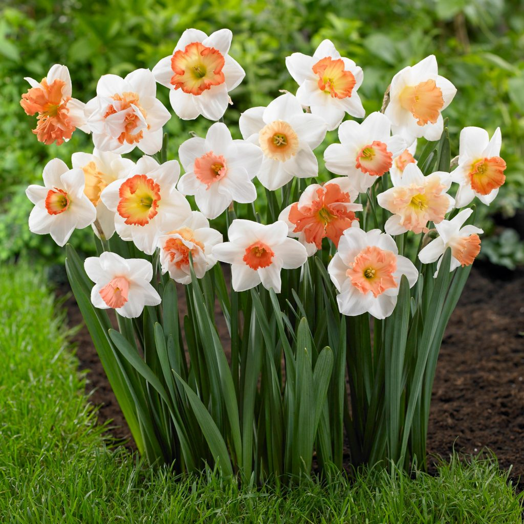 Spring-Blooming Bulbs for Your Garden - Longfield Gardens