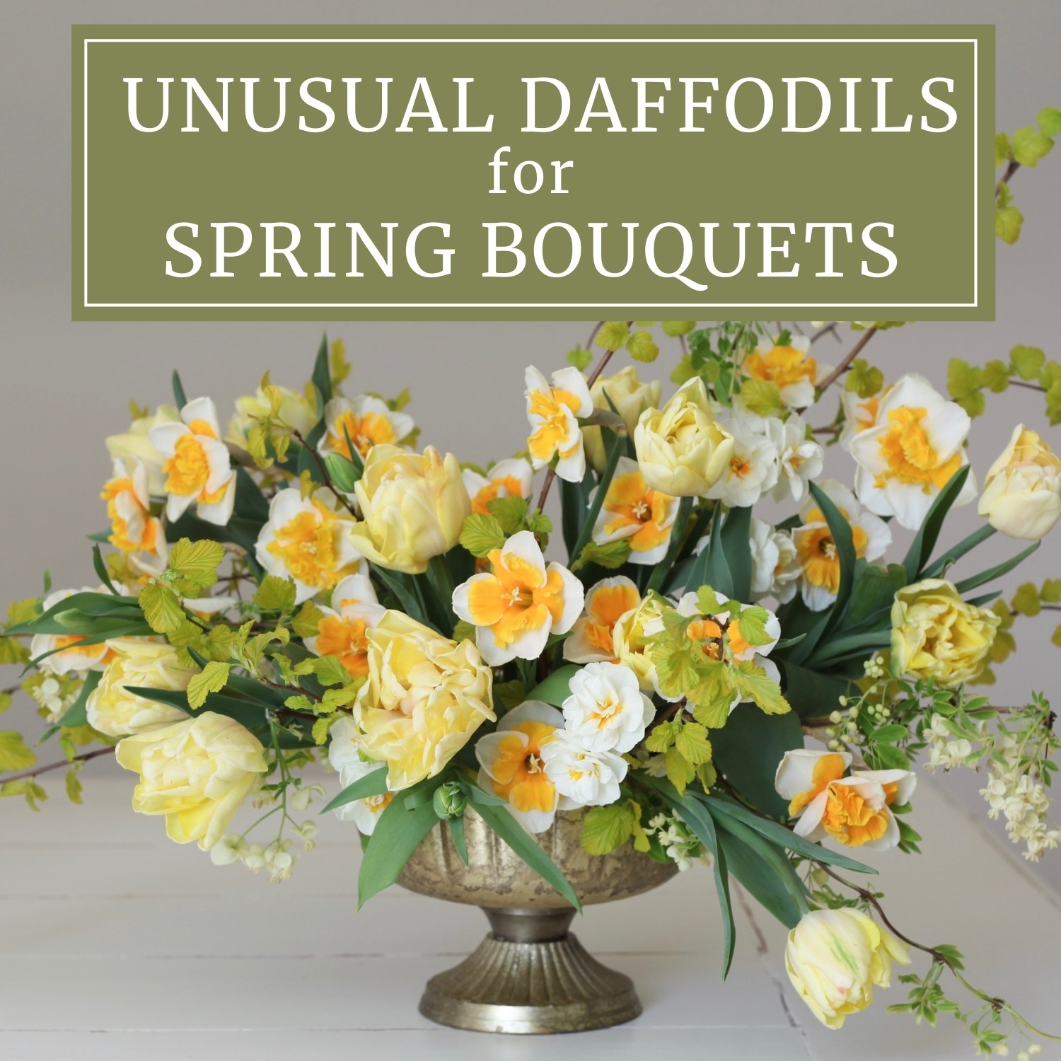 Unusual Daffodils for Spring Bouquets - Longfield Gardens