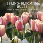 New Spring-Blooming Bulbs for Your Garden