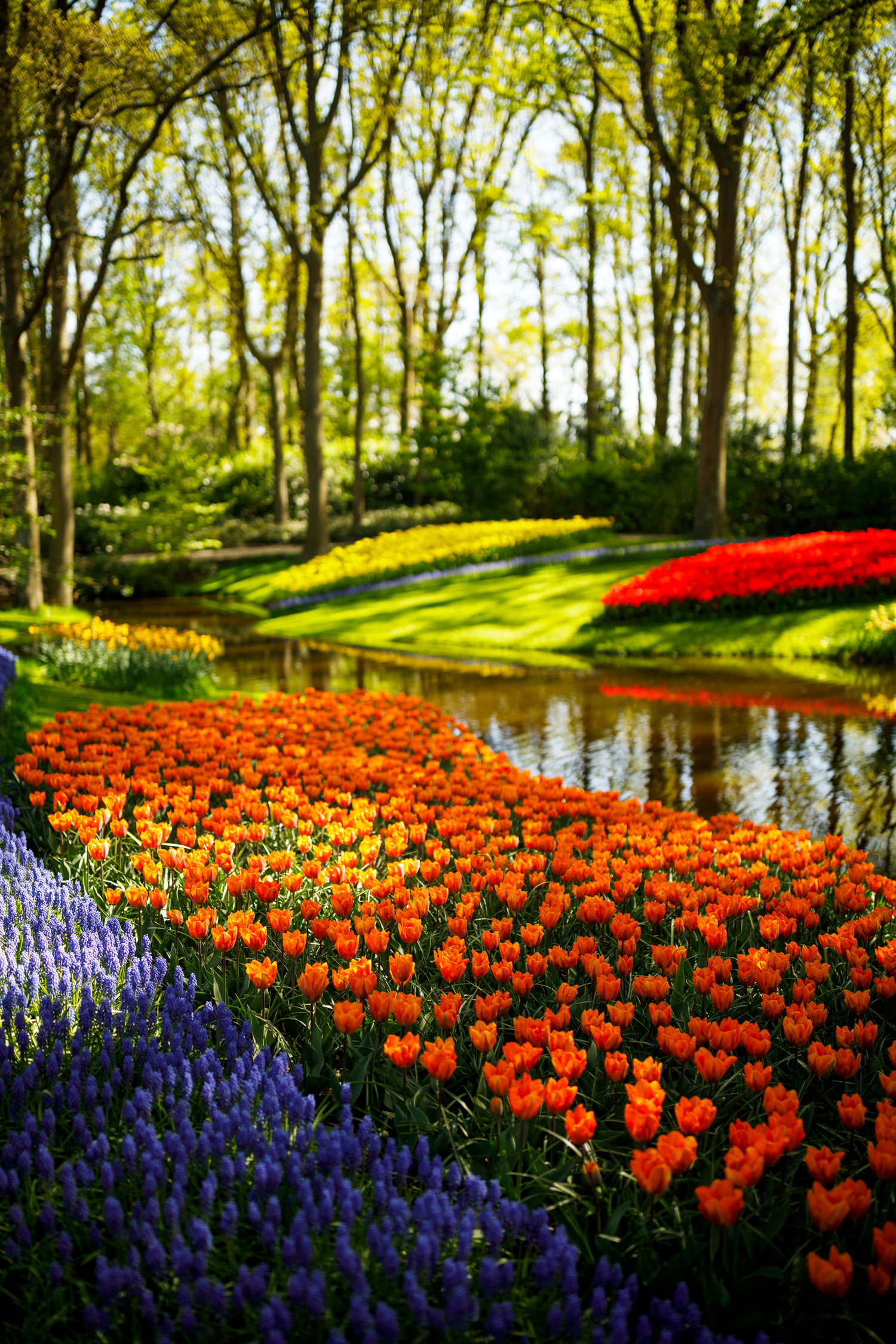 Invest in a Colorful Spring Garden - Longfield Gardens