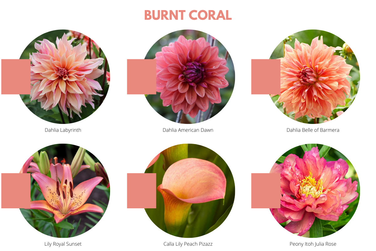 Color Trends for Your Flower Garden - Longfield Gardens