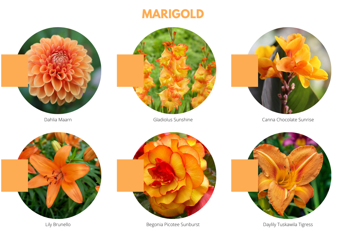 2021 Color Trends for Your Flower Garden - Longfield Gardens