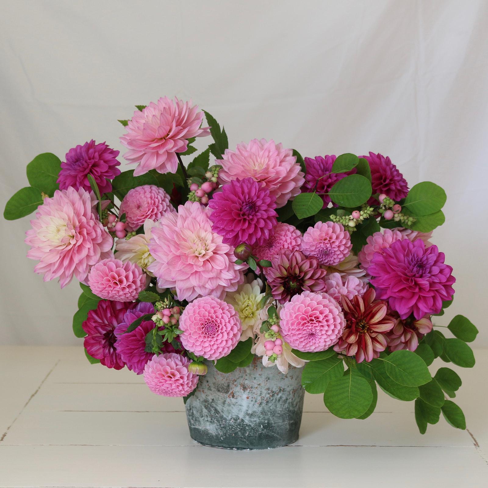 New Dahlia Collections from Flirty Fleurs - Longfield Gardens