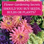 Starting Flowers from Seeds, Bulbs or Plants