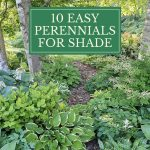 10 Easy Perennials for Shade