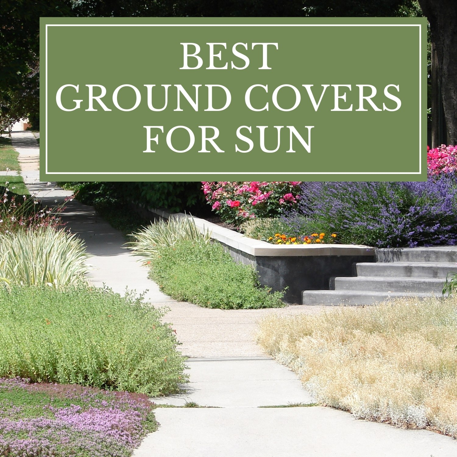 Best Groundcovers for Sun