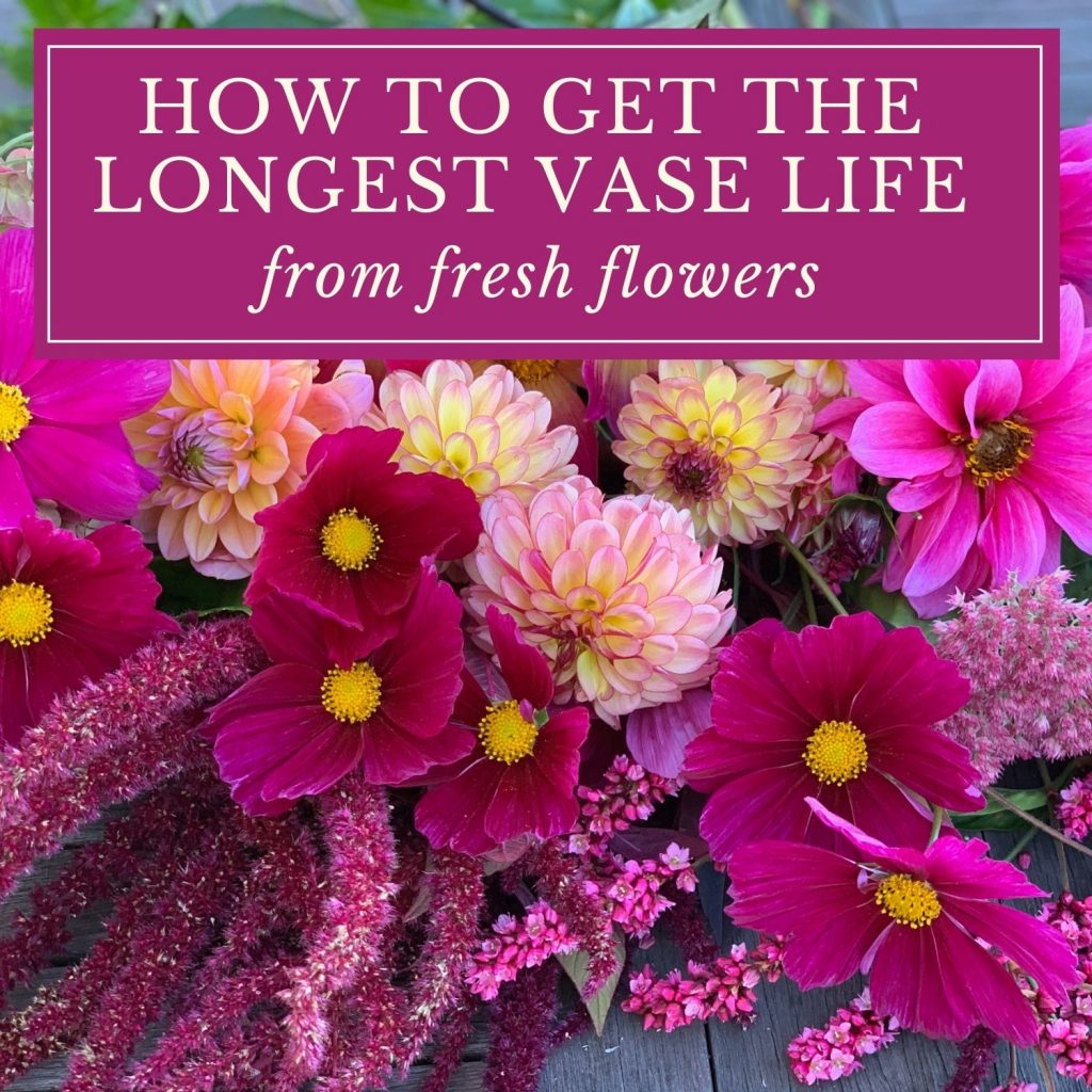 HOW TO GET THE LONGEST VASE LIFE