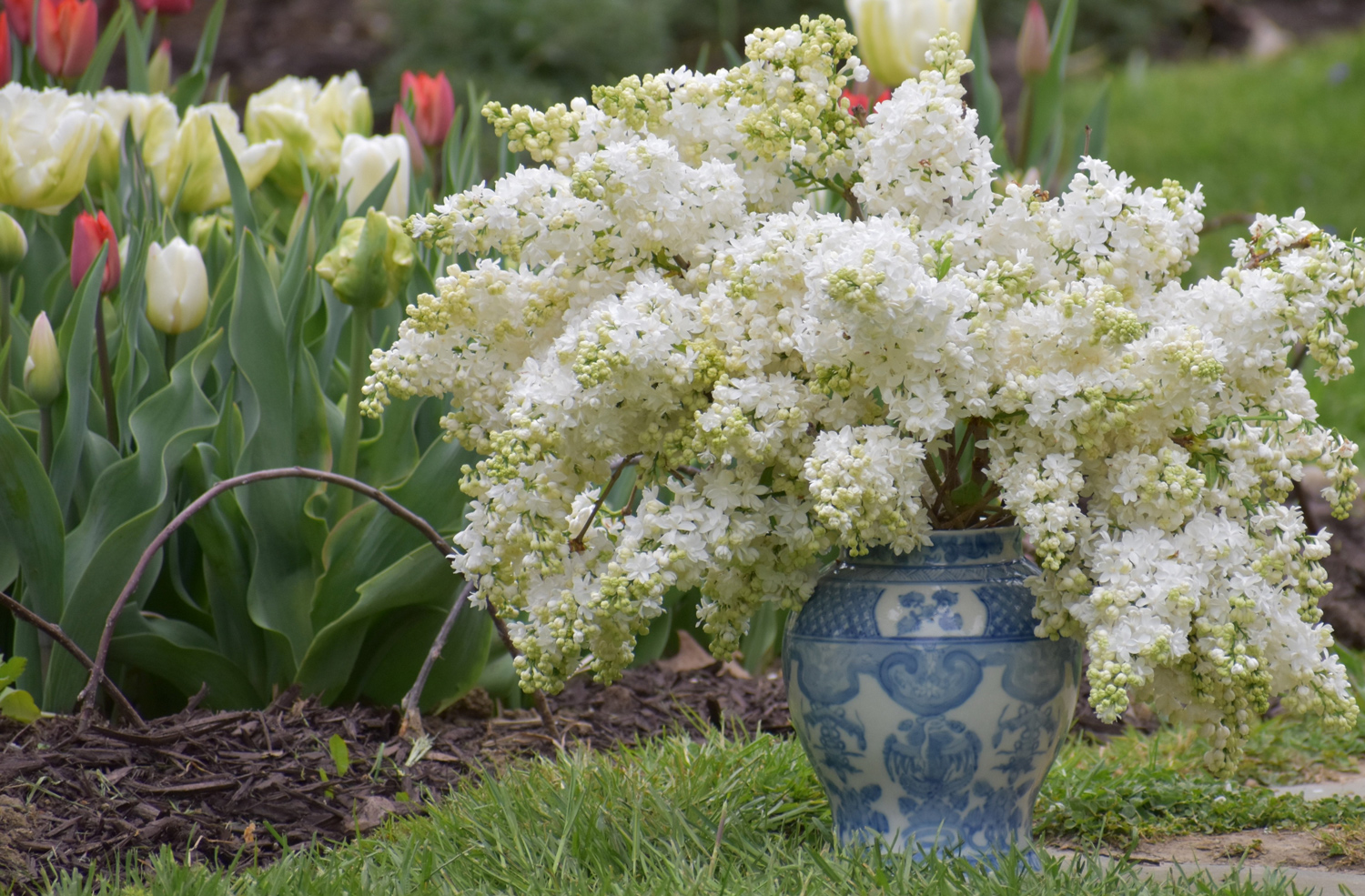 How to Get the Longest Vase Life from Fresh Cut Flowers - Longfield Gardens