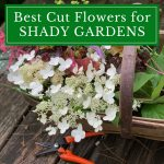 Best Cut Flowers for Shady Gardens
